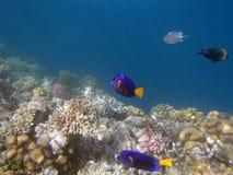 Underwater world. Snorkeling around Hurghada, egypt.2013 Stock Photos