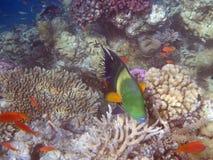 Underwater world. Snorkeling around Hurghada, egypt.2013 Royalty Free Stock Images