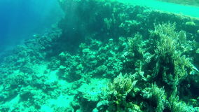 Underwater world. View of seabed with corals stock video
