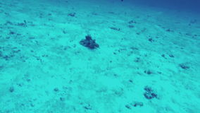 Underwater world. View of seabed and fishes. Close-up stock footage