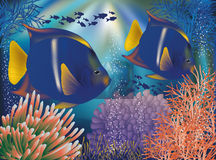 Underwater world wallpaper with tropical fish Royalty Free Stock Image
