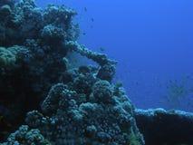 Underwaterscene en Mer Rouge Photo libre de droits