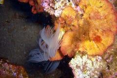 Underwaterworld Royalty Free Stock Photo