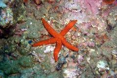 Underwaterworld / Seastar Royalty Free Stock Image