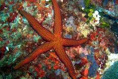 Underwaterworld / Seastar Stock Photography
