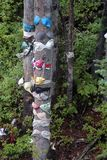 Underwear on Evergreens Mount Washington, BC. Evergreens covered with assorted underwear including bras, brassieres, briefs and panties line the ski lift pathway royalty free stock photography