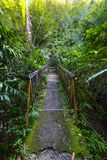 Underwood hiking road, Reunion Island Stock Photography