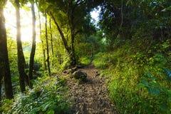 Underwood hiking road, Reunion Island. Underwood hiking road at Reunion Island during a sunny day Stock Photos