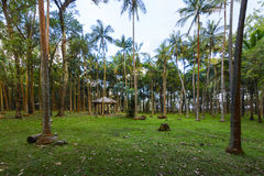 Underwood picnic site at Anse des Cascades, Reunion Island Royalty Free Stock Photography
