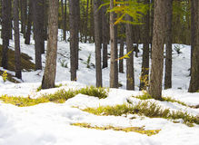 UNDERWOOD WITH SNOW AND HUMUS Stock Photo