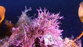 Underwter hermoso de las algas en el mar blanco almacen de metraje de vídeo
