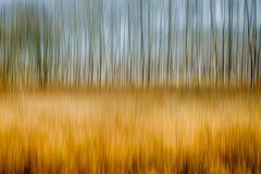 Undeutliche Bäume Stockfotografie