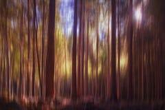 Undeutliche Bäume, Holz, Waldhintergrund Schöne Natur im Fall, Herbst lizenzfreies stockbild