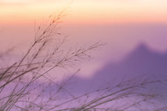 Undeutlicher Fokus des violetten Berges mit beweglichem Gras Stockfoto