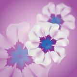 Undeutliches Blume background_lilac Stockbilder