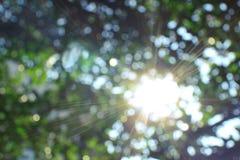 Undeutliches Sonnenlicht und die Blätter im blauen Himmel Lizenzfreies Stockfoto