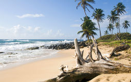 Undeveloped beach Corn Island Royalty Free Stock Image