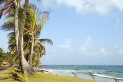 Undeveloped Sally Peach beach palm trees  Caribbean Sea with nat. Undeveloped Sally Peach beach palm trees on Caribbean Sea with native building Big Corn Island Royalty Free Stock Image