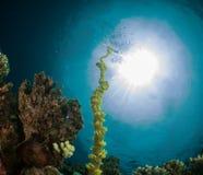 Undewater de Maldiven Stock Foto's