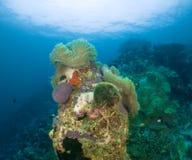 Undewater de Maldiven Royalty-vrije Stock Foto's