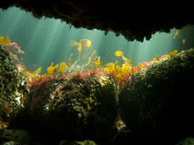 Underwater sea cave Stock Photography