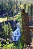 Undine Falls in Yellowstone Stock Foto's