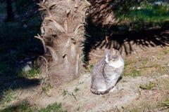 Undomestic pasiasty kota obsiadanie pod drzewkiem palmowym w jaskrawym słońcu obraz stock