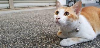 Undra den orange och vita katten lägger ner på gatan och att stirra något arkivbild