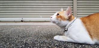 Undra den orange och vita katten lägger ner på gatan och att stirra något royaltyfri fotografi