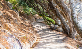 Undulating coastal path Mount Maunganui, scenes from the track. Stock Photos