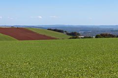Undulating farm fields. With ploughing in background. Northern Tasmania, Australia Royalty Free Stock Photo