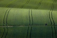 Wavy fields, fairy-tale patterns, Poland stock photos