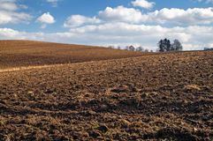 Undulating plowed field in early spring. A group of trees on the horizon, white clouds in the blue sky Stock Image