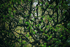 Undurchdringlicher Wald Lizenzfreies Stockbild