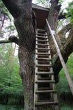 Une échelle dans la forêt photos stock