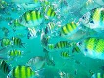 Une école des poissons tropicaux. Photographie stock libre de droits