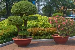 Une émeute de verdure dans le Central Park de Ho Chi Minh City Images stock