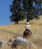 Une équitation de cowboy dans un domaine avec des arbres lèvent une traînée de montagne Photos libres de droits
