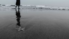 Une étoile de mer dérivée le long du bord de mer photos stock