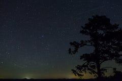 Une étoile filante brillante montant au-dessus d'un pin très haut photos stock