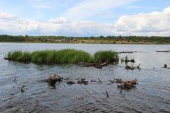Une île d'herbe Image libre de droits