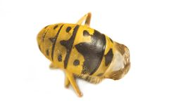 Une abeille Images libres de droits