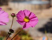Une abeille en fleur Image stock