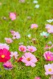 Une abeille sur la fleur Photo stock