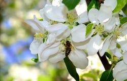 Une abeille sur une fleur Images stock