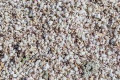 Une abondance de coquilles de mer photos libres de droits