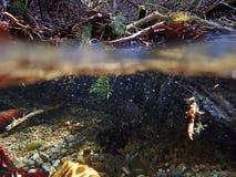 Une absorption d'eau du fond et d'eau par un courant photos libres de droits
