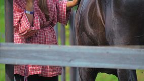 Une adolescente prend soin des chevaux à une ferme banque de vidéos