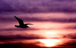 Une aile et une prière Images stock