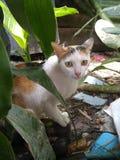 Une alimentation de attente de chat d'humain Image libre de droits